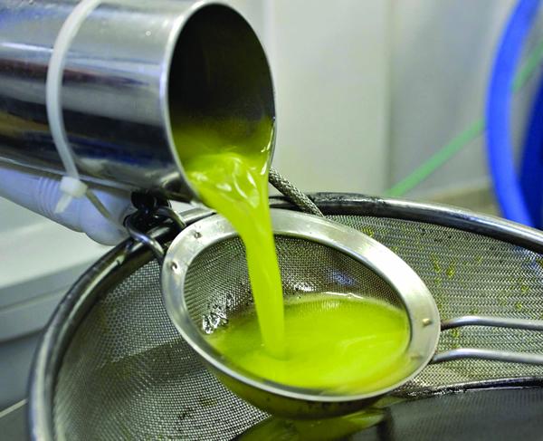 新鲜橄榄油图片